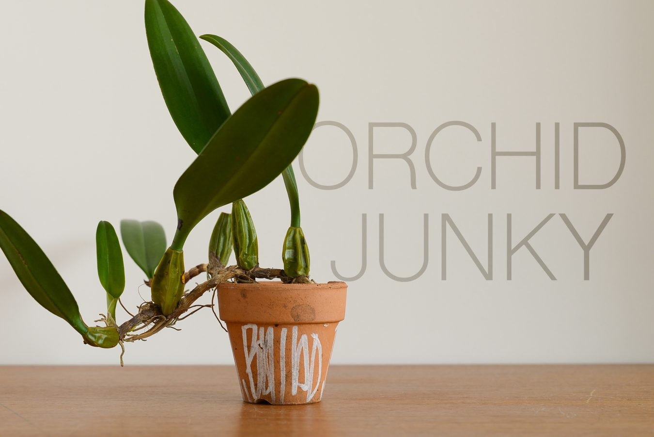 orchid_junky